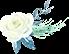 绿叶白花.jpg